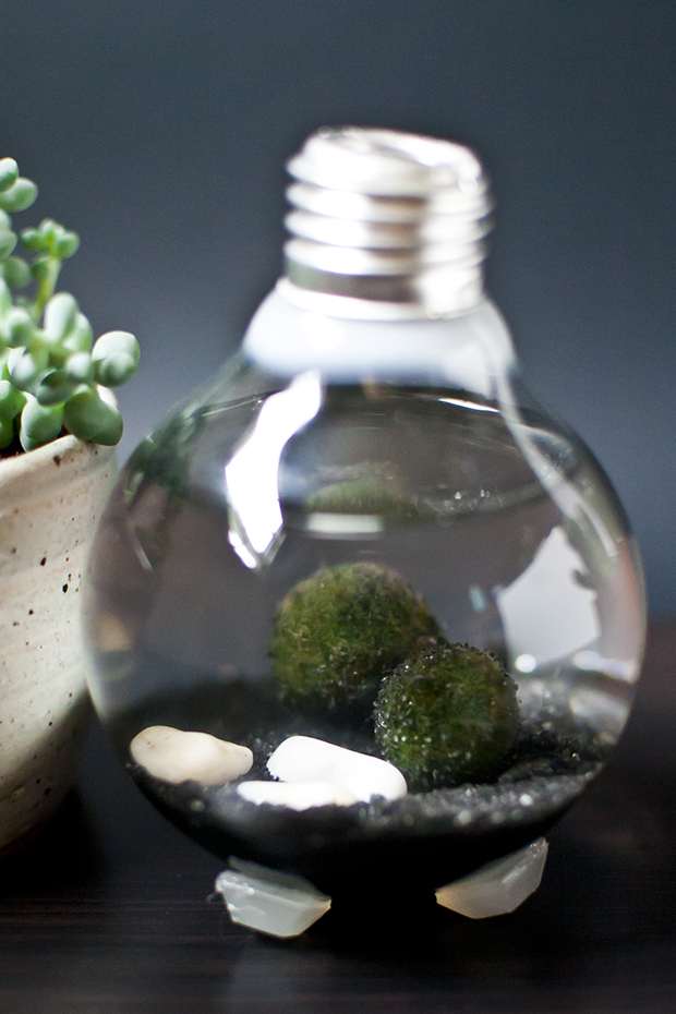 This lightbulb terrarium is a wonderful, quick little project that can be great for fun holiday décor around the home, on the tree, or a unique gift! I will show you how to make it and I will show you how to open up the lightbulb safely. There are two plants in this terrarium: Remove the metal tab.