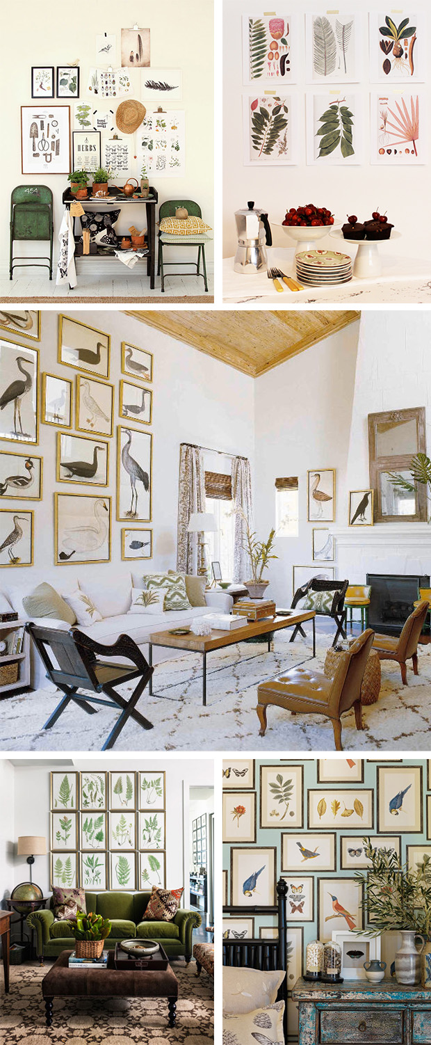 Use free printable vintage art to give a room a cabinet-of-curiosities feel with a gallery wall of natural art of plants or animals. #art