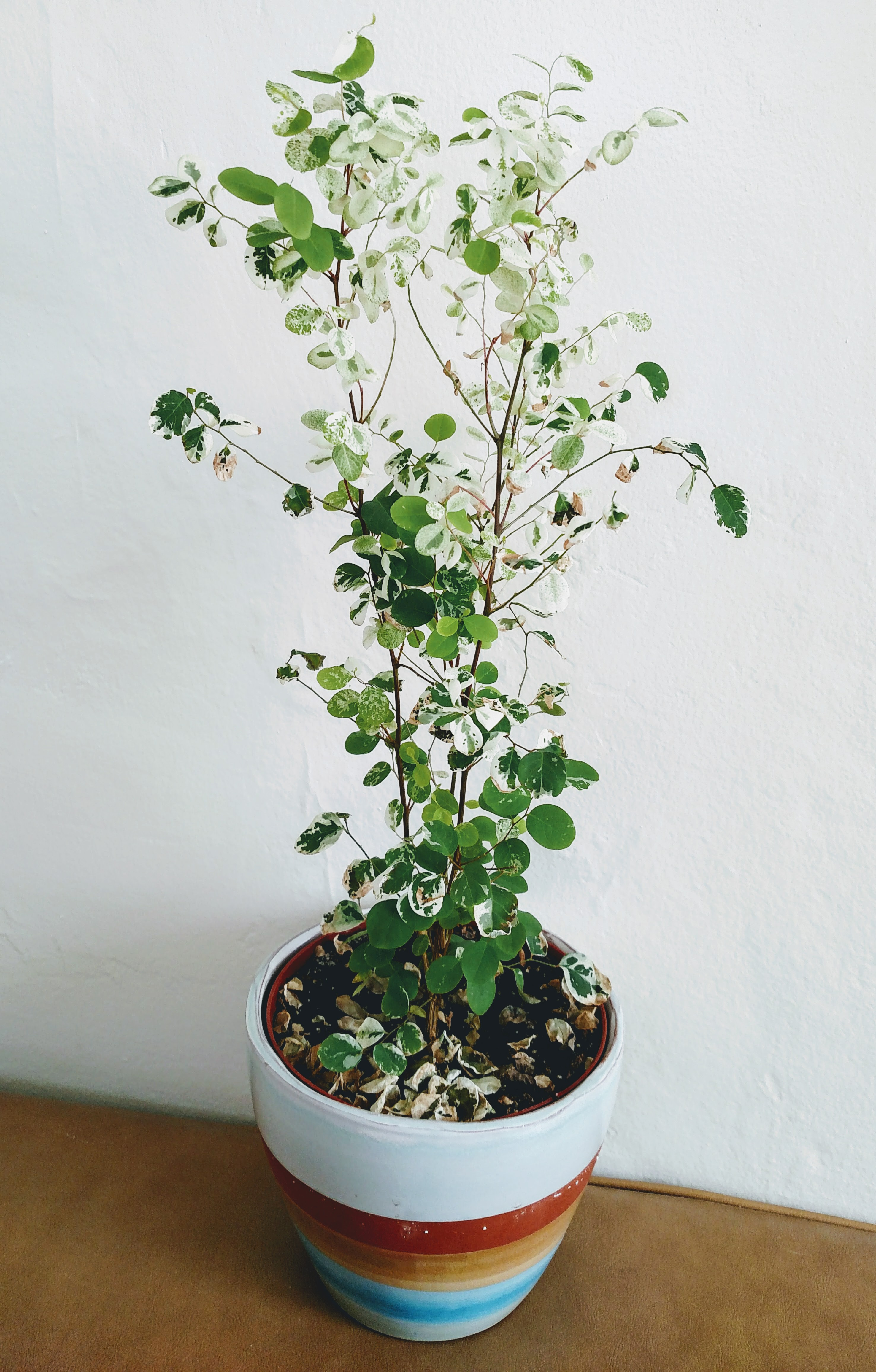 mystery plant
